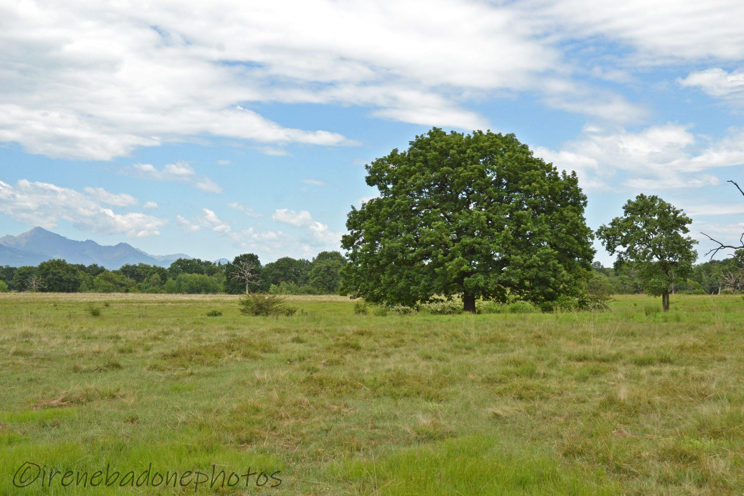 Il parco vanta la presenza di enormi querce centenarie