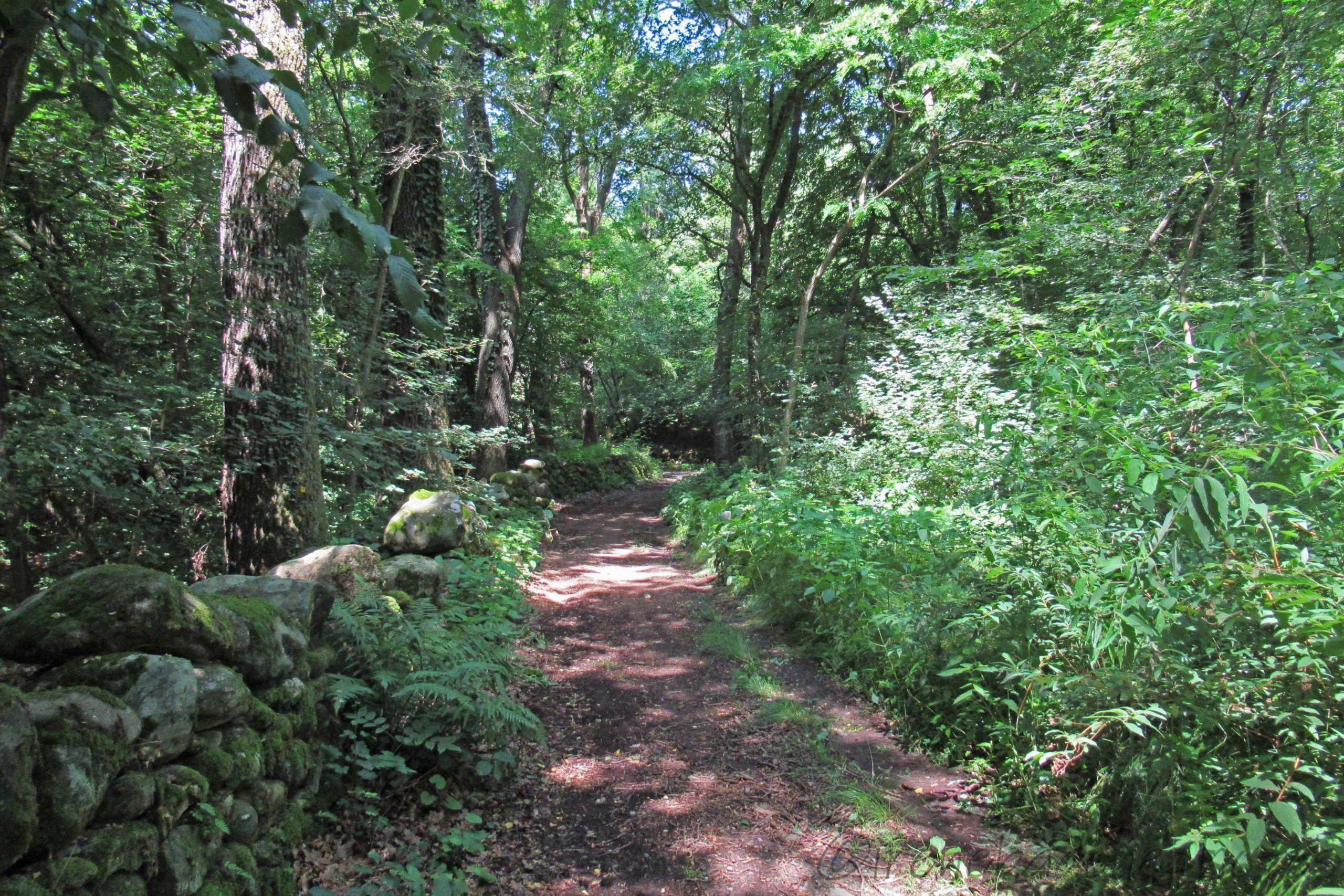 Il sentiero si insinua tra i boschi