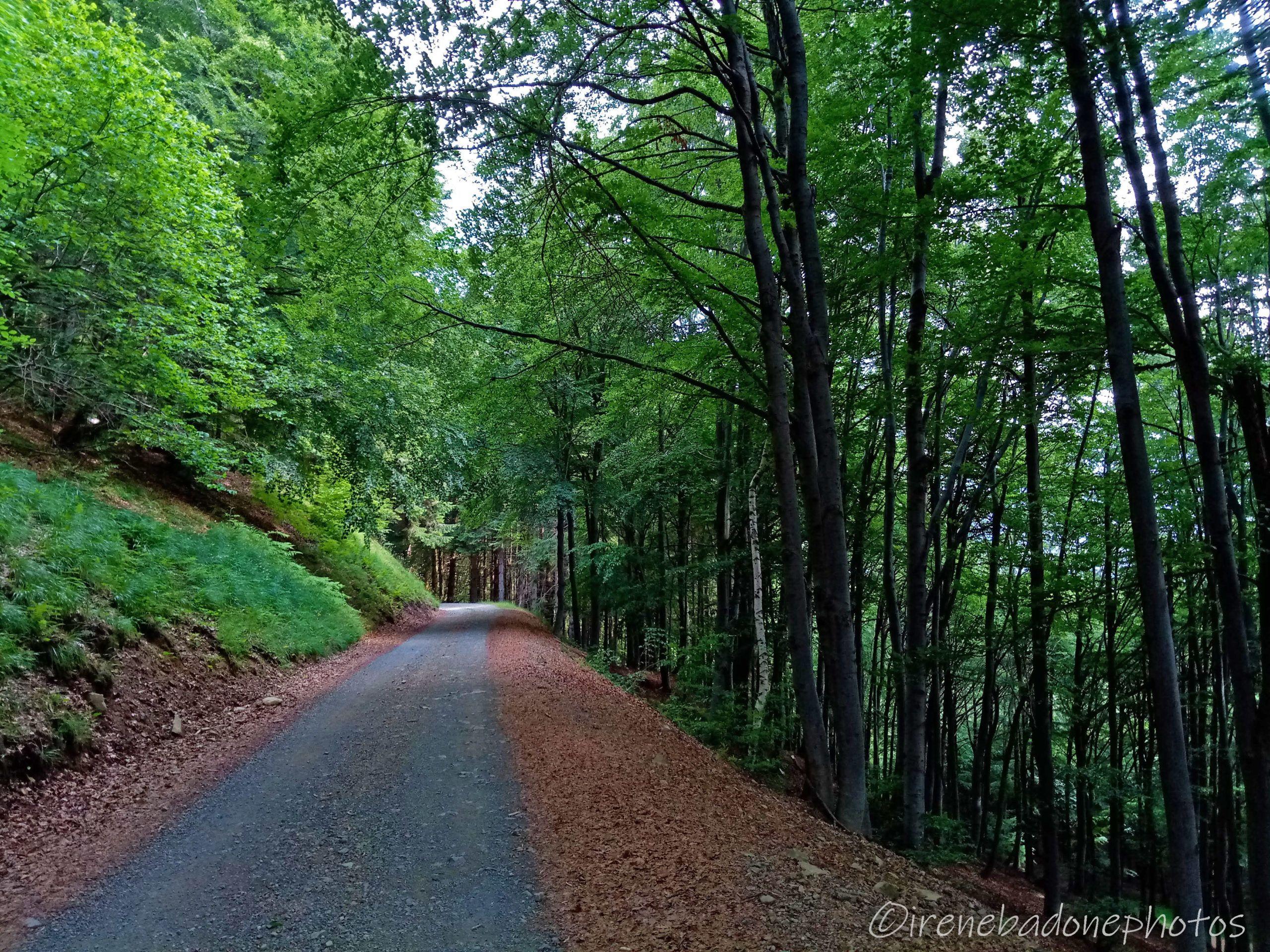 Facile strada sterrata tra i boschi di faggi