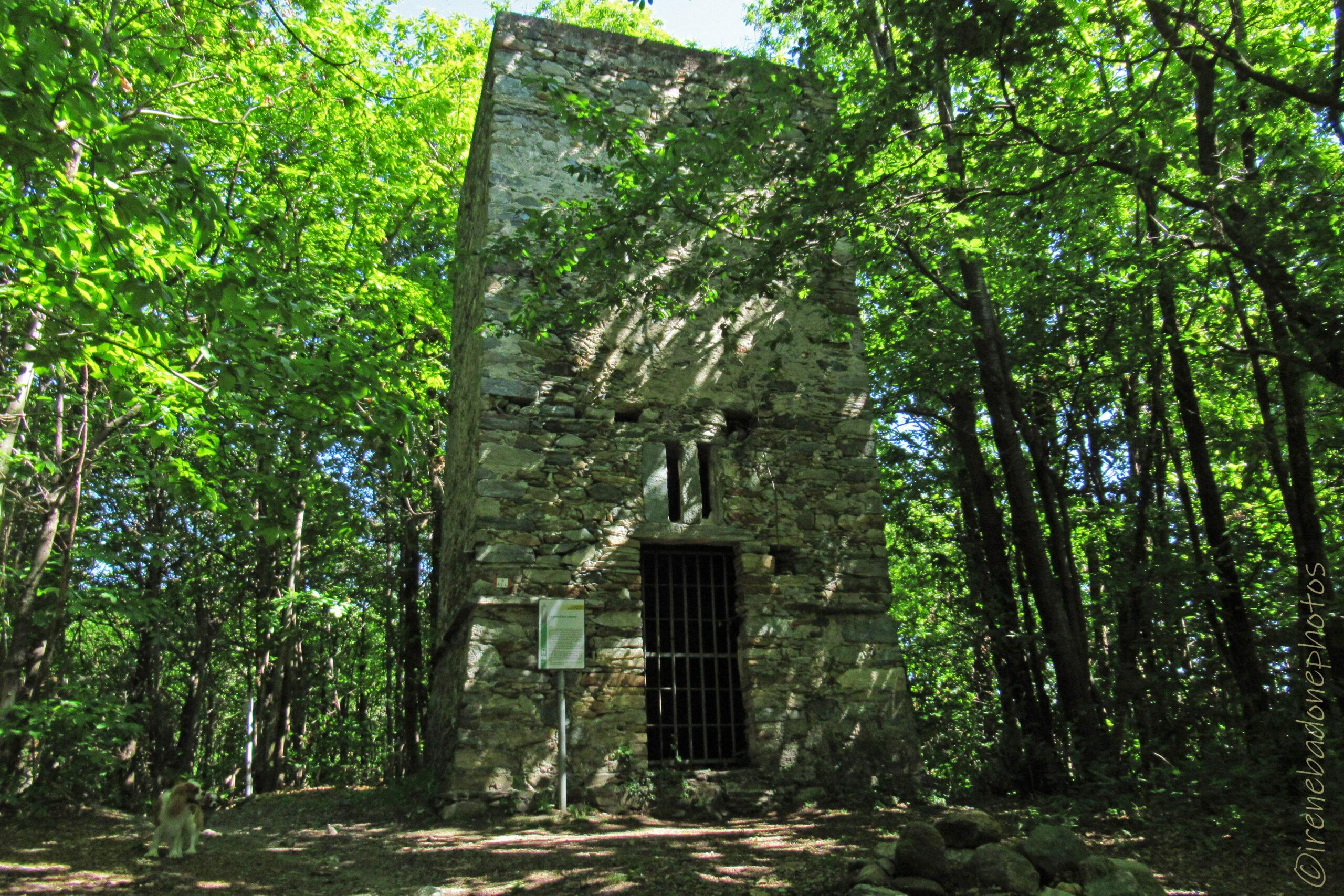 Tra la fitta boscaglia, compare imponente la Torre di San Lorenzo