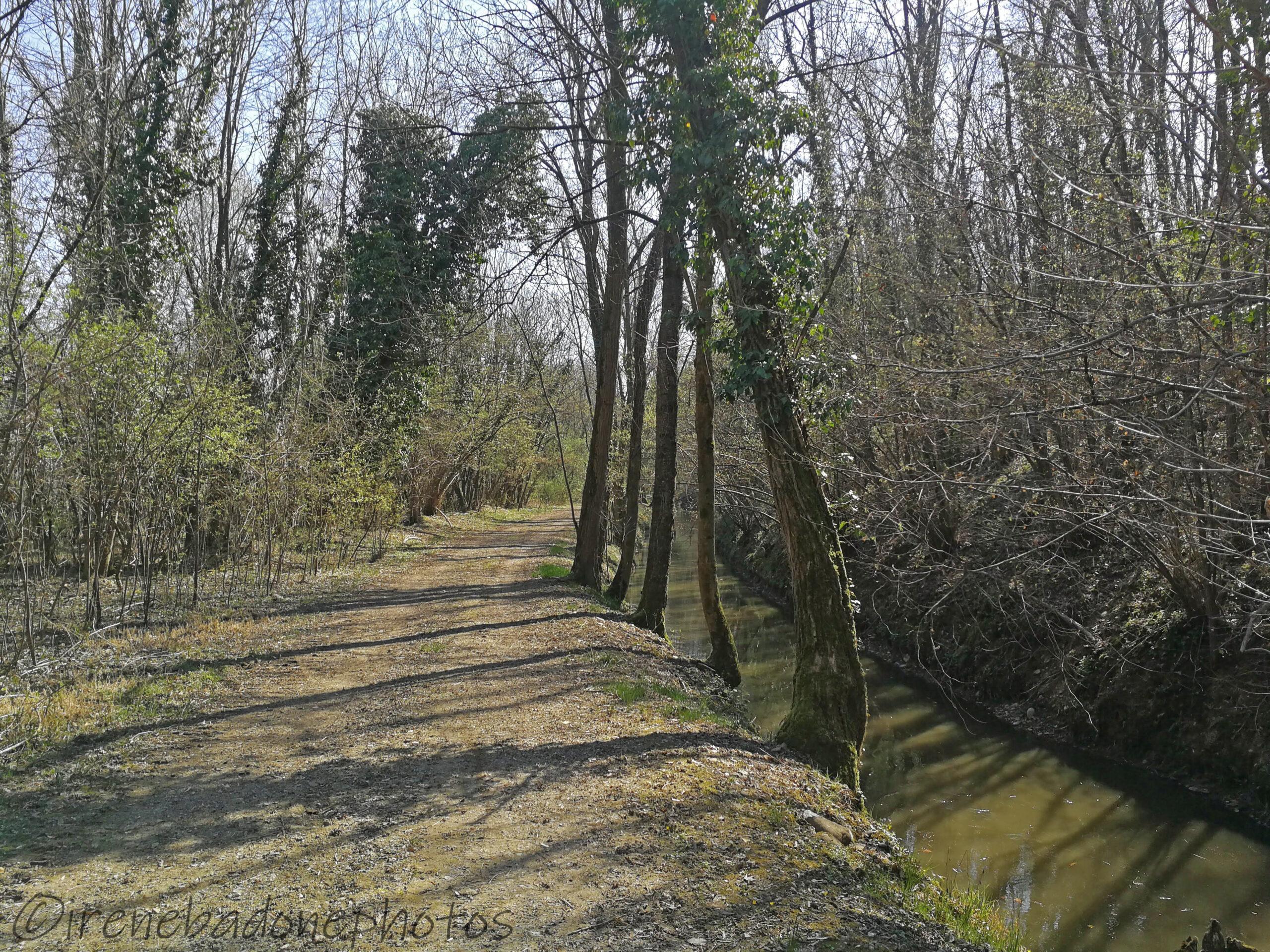 Tra i boschi, seguendo il canale