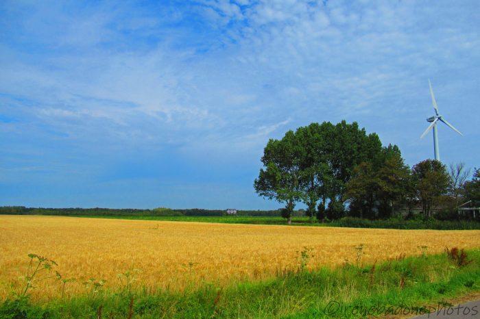 Campi coltivati e pale eoliche: i Paesi Bassi riassunti in due parole