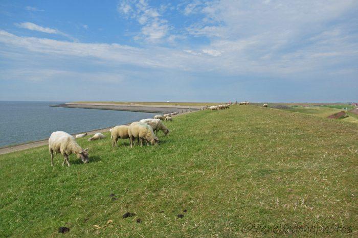 Centinaia di pecore completano il paesaggio, come in un dipinto impressionista
